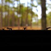 Jak se zbavit mravenců přírodní cestou