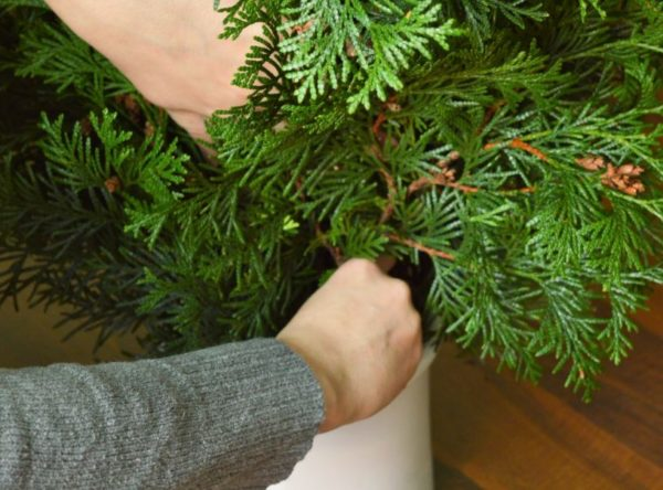 Jak vyrobit vánoční stromeček z tuje